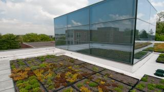 Green Roof - Sherrerd Hall
