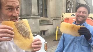 Facilities staff with bee comb